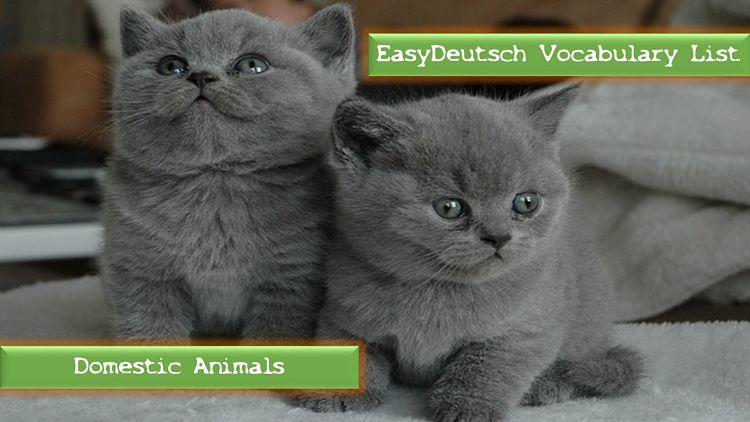 Vocabulary list German domestic animals_opt (1)