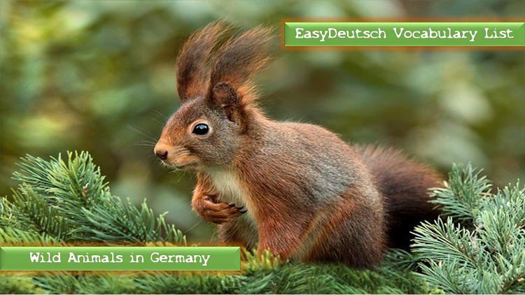 WIldtiere in Deutschland_opt (1)