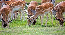 deer-275963_640_opt