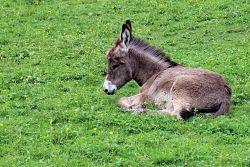 donkey-409165_1280_opt