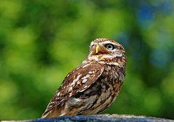 owl-275940_640_opt
