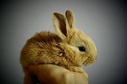 rabbit-373691_640_opt