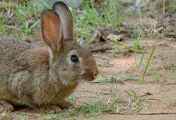 German Vocabulary: Wild Animals in Germany