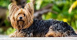 Deutsch lernen Vokabelliste Haustiere
